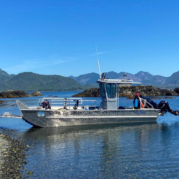 Shorebird Expeditions